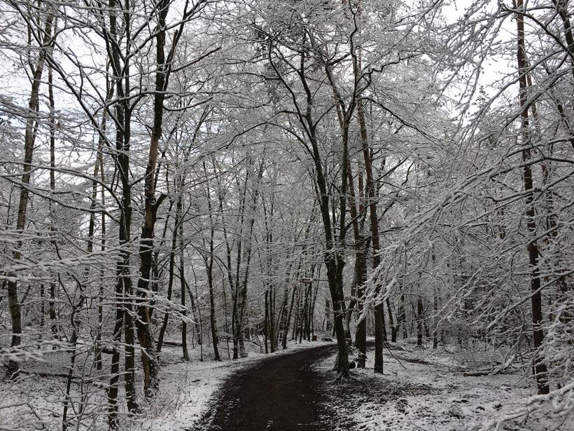 Tief verschneiter Waldweg