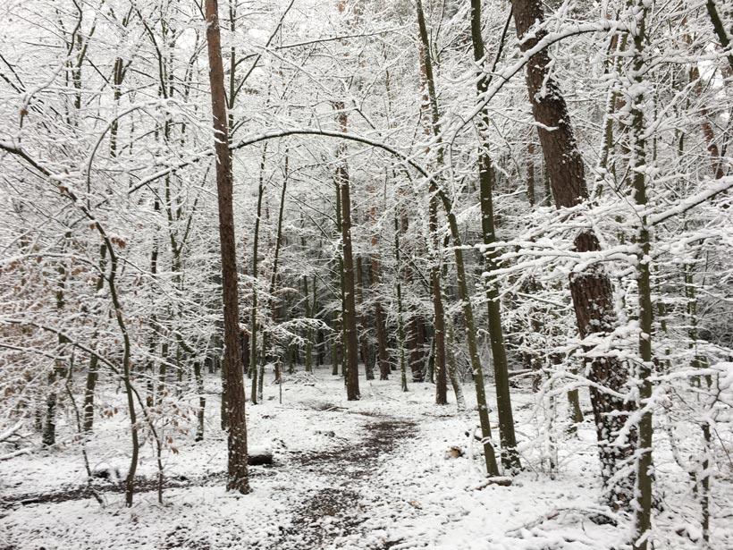 Verschneiter Reitweg Wald