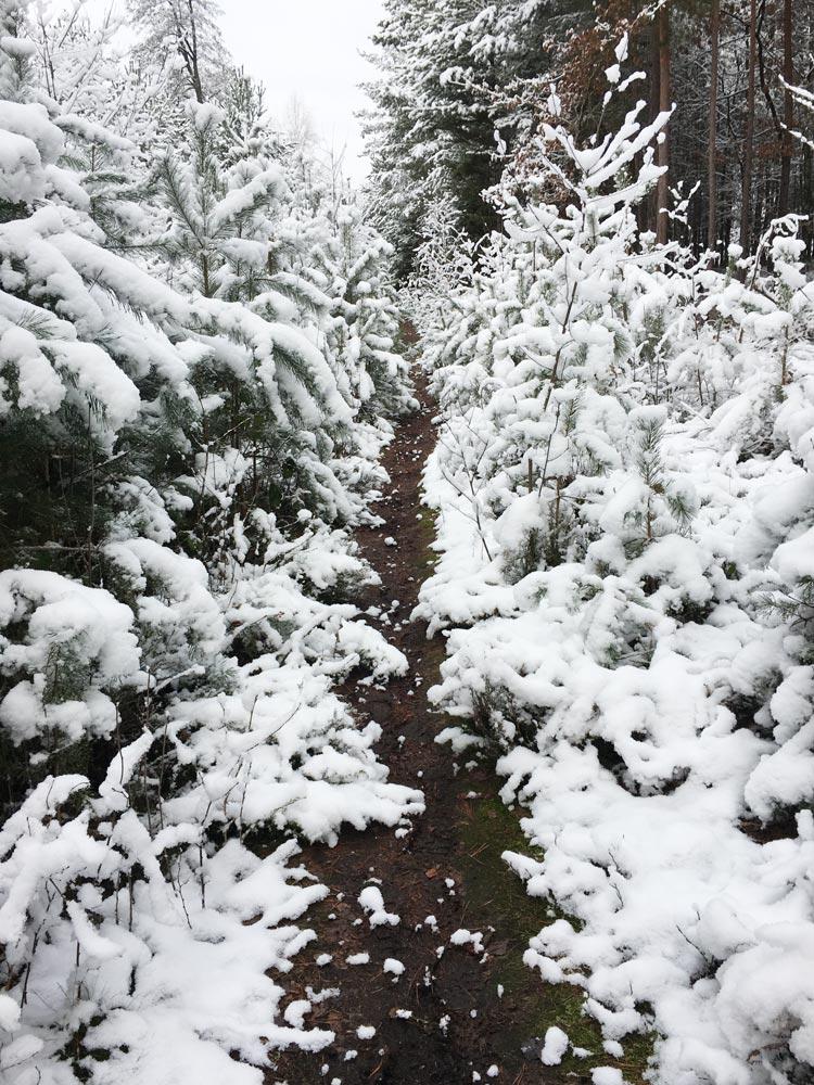 Verschneiter Waldpfad