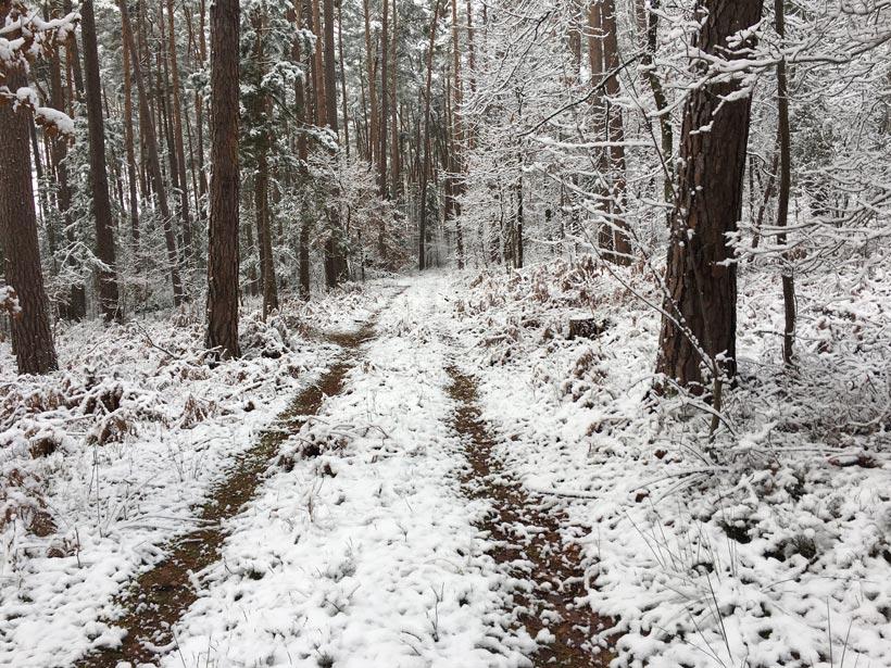 Verschneiter Forstweg im Wald