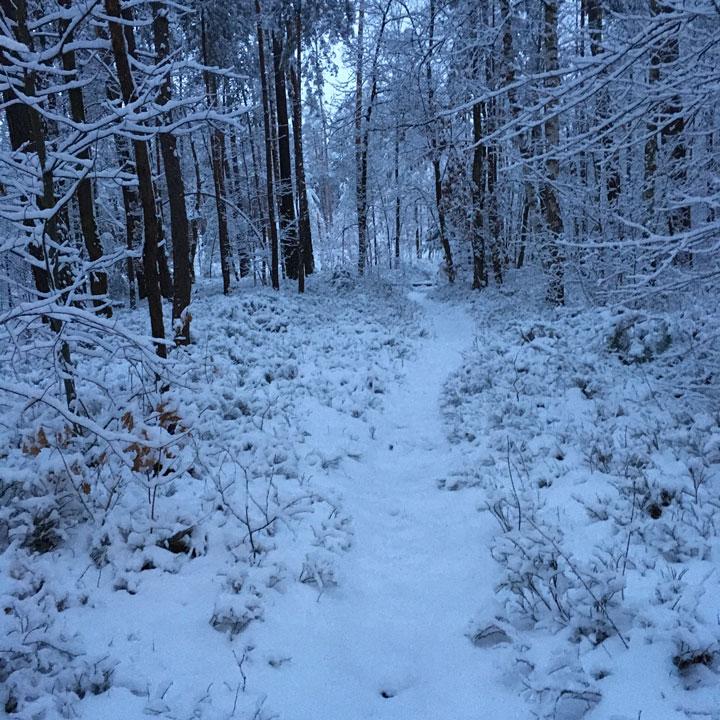 Single Trail im tief verscheniten Wald