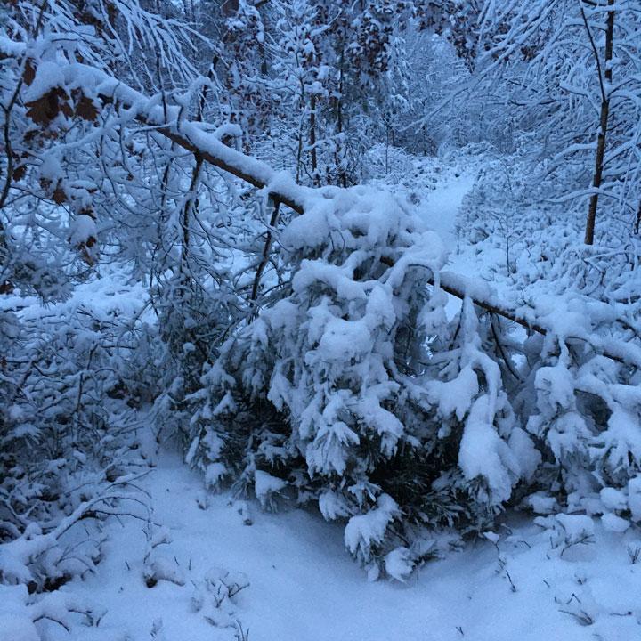 Von Schneelast umgestürzter Baum versperrt den Weg